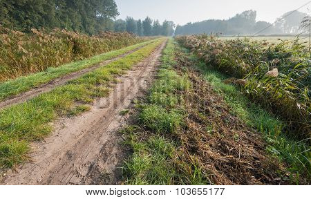 Tire Tracks On A Dirt Road Through A Rural Area