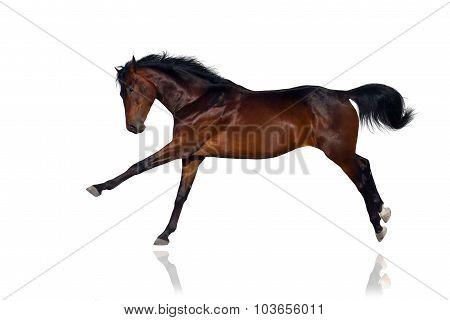 Horse funny gallop