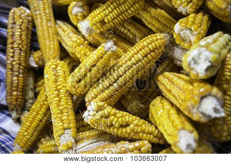 Yellow Colored Organic Raw Corn Cobs In A Basket