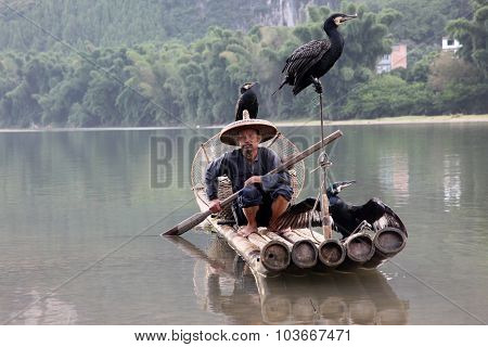 Chinese Man Fishing With Cormorants Birds In