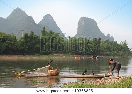 Chinese Man Preparing For Fishing With Cormorants Birds