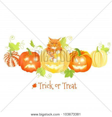 Decorative Halloween Pumpkins And Red Cat Vector Design Objects