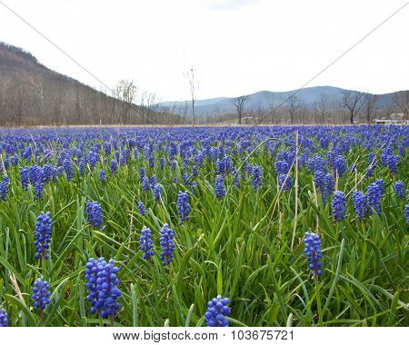 Field Near Columbia Furnace
