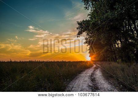 Landscape sunset over field