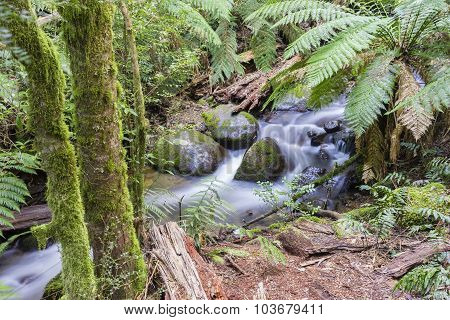 Rainforest stream with plants in a national park