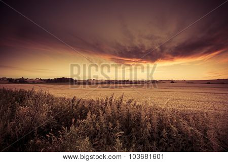 Beautiful Sunset Over Summer Field