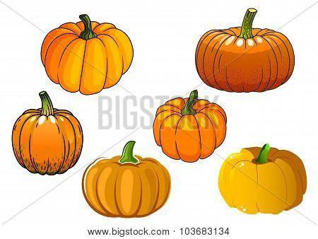 Orange pumpkin vegetables in cartoon style