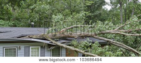 Tree Falls Totaling A House Roof