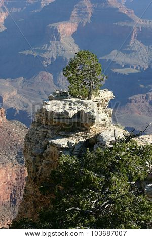 Solitary Tree Overlooking The Majestic Grand Canyon