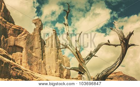 Retro Old Film Style Nature Background With Dry Tree And Rocks.