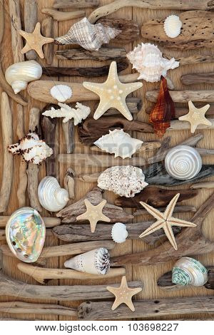Driftwood and seashell abstract background on oak wood.