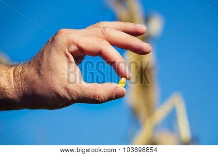Corn seed in hands of farmer