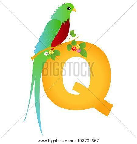 Animal Alphabet Letter Q