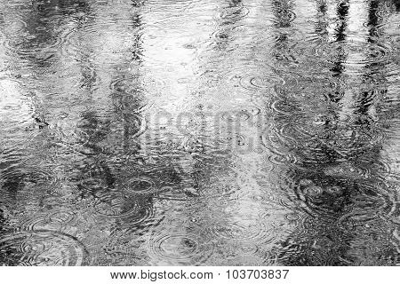Raindrops On Puddle With Trees Reflection