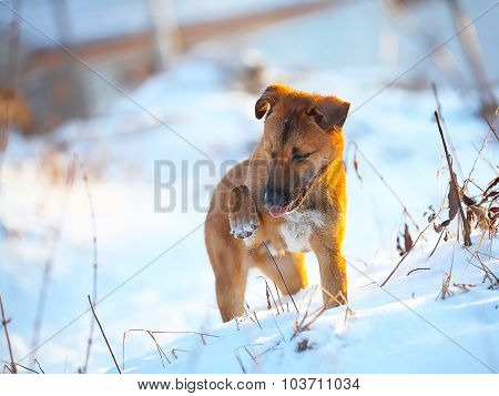 Young Puppy On Snow In Winter
