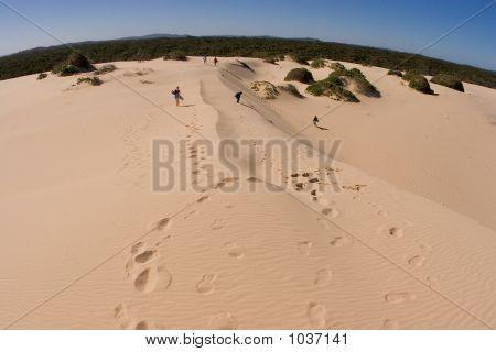 Sandsurfer