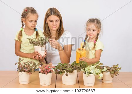 Mother And Daughter Consider And Watering Houseplants