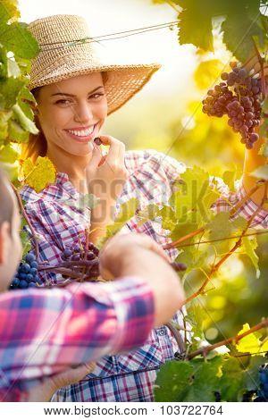 Attractive girl in vineyard with her boyfriend