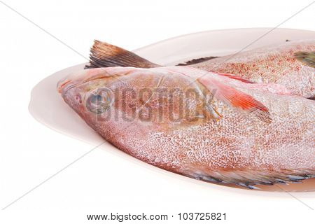 raw fresh sunfish prepared for cooking on ceramic plate