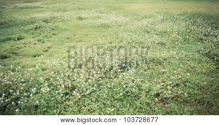 Image Of Grass Field And The Globe Amaranth Flower