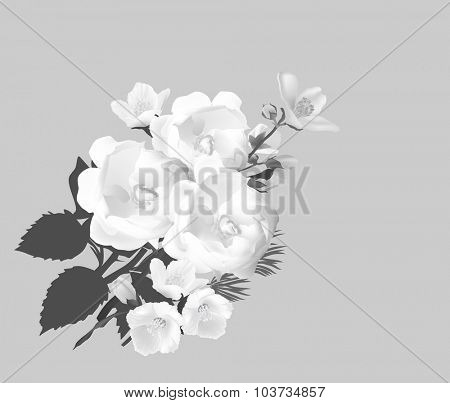 illustration with jasmine and rose flowers isolated on grey background