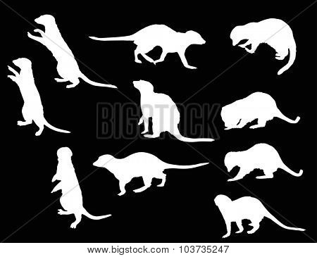 illustration with set of meerkat isolated on black background