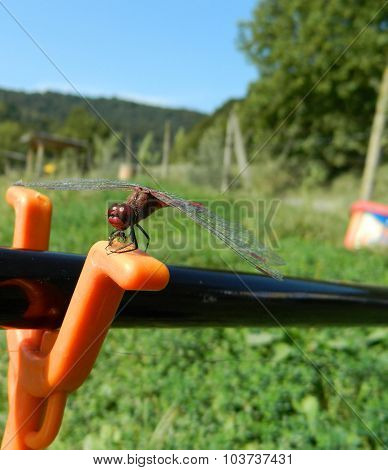 Dragonfly / Anisoptera On Fishig Pole With Orange Support.