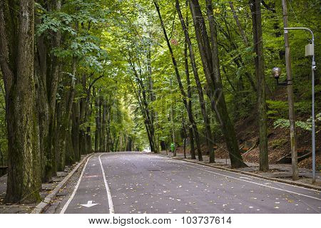 beatiful Road In The Forest Park