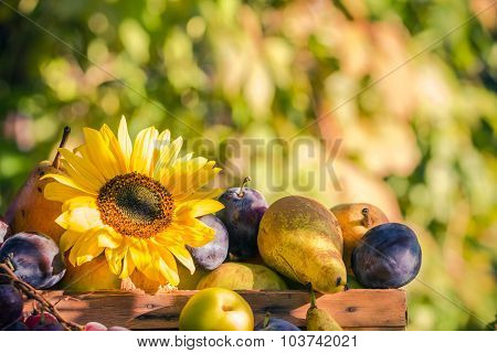 Garden Late Summer Seasonal Fruits Basket Light Setting Sun