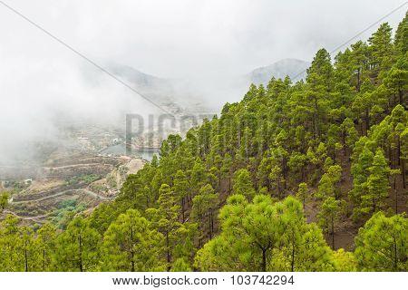 Gran Canaria, Nature Park Tamadaba
