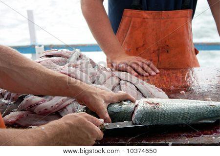 Fishermen Cleaning Blue Fish