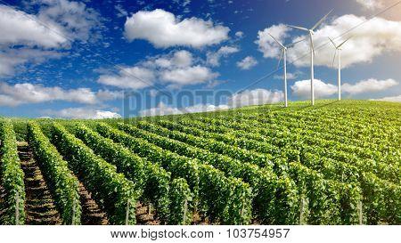 Wind generators turbines on summer landscape under blue sky. Header for website