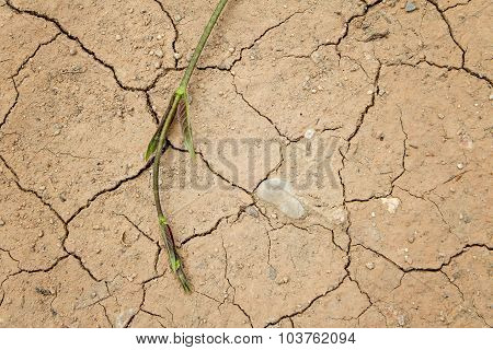 Plant Grow Up On Dry Cracked Ground