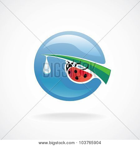 Ladybug On Green Leaf Tip With Fresh Water Drop