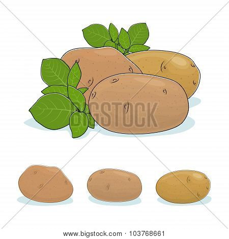 Potato Vegetable, Edible Fruit
