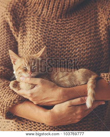 Cute ginger kitten sleeps on his owner's hands in warm sweater