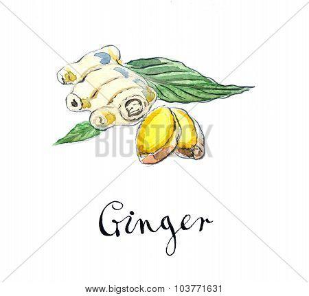 Fresh Sliced Ginger With Leaves