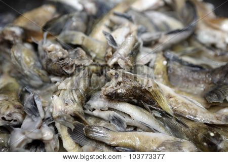 Cooking Of Goby Fish