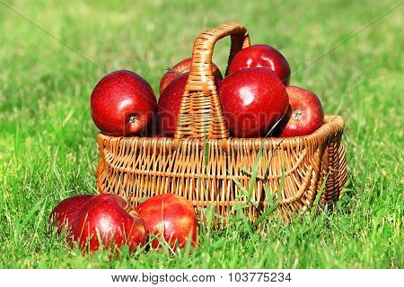 Ripe red apples in wicker basket on grass outdoors