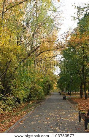Walking in the park in autumn