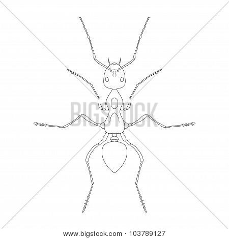 Formica Exsecta. Sketch Of Ant. Ant Isolated On White Background. Ant Design For Coloring Book.