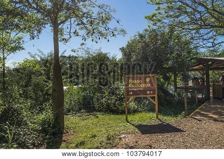 Ecologic Tour At Iguazu Park In Argentina