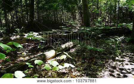 Fallen Logs on the Forest Floor
