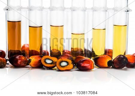 Oil Palm Biofuel Biodiesel With Test Tubes On White Background.