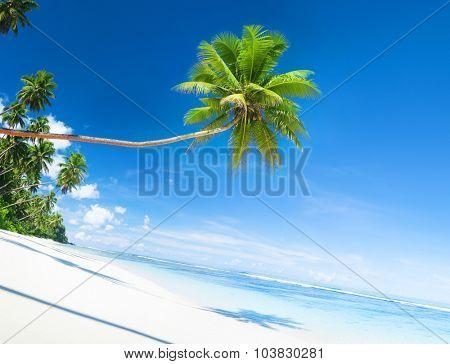 Scenic White Sand Beach Summer Tree Concept