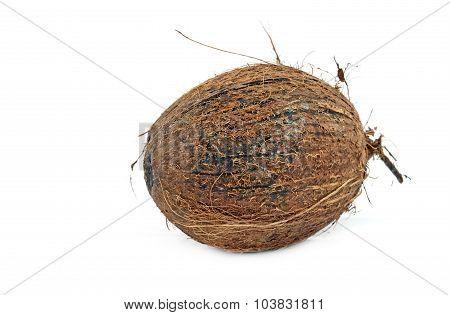 Rotten Coconut