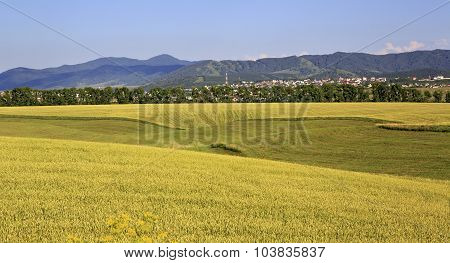 Beautiful agricultural fields and the town of Belokurikha.
