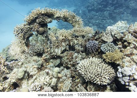 Colorful Coral Reef With Hard Corals In Tropical Sea, Underwater