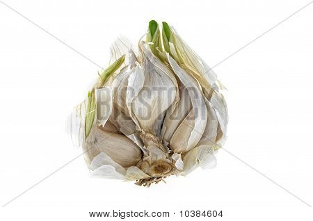 Open Garlic