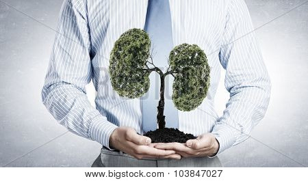 Close up of businessman holding in hands green tree concept